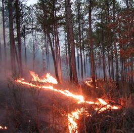 Flames in a forest area